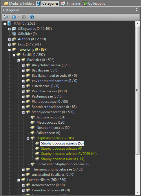 Categories panel of Imatch 5, metadata, geotags, geodata, Photools.com
