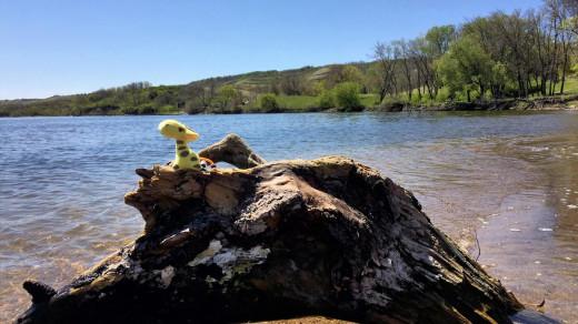 2015-05-18 11.19.53 EDIT 1200px   Spotty Raffy chilling by the beach.