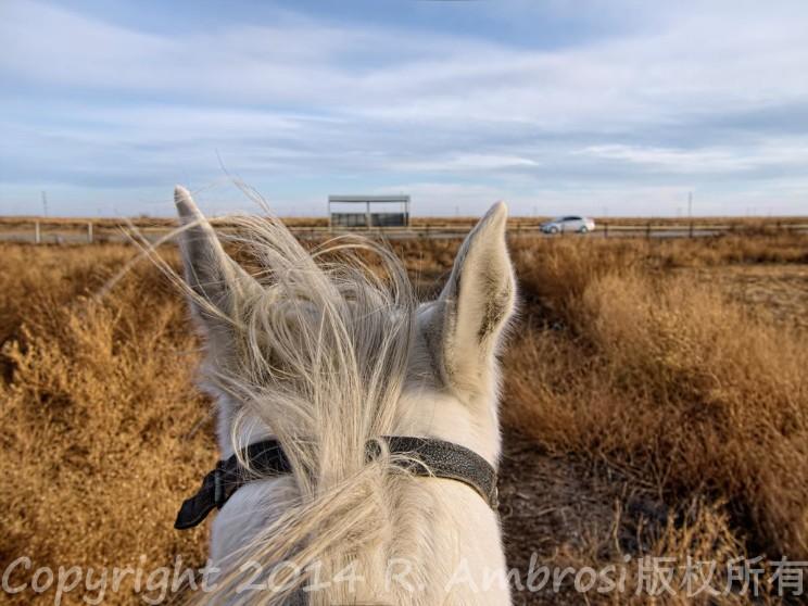 horseback riding Kazakhstan